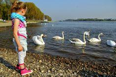 hummeltigereule: Schwanensee...