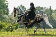 Arabian Horse Arabian Horse Show - Western Competition Egyptian Stallion Breeding PIntabians Beautiful Arabian Horses, Majestic Horse, Pretty Horses, Horse Love, Arabian Horse Costume, Horse Costumes, Arabian Costumes, Arabian Beauty, Horse Photos