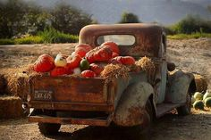 Grandpa's old truck becomes a pumpkin patch!.
