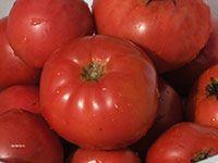 Earliana Tomatoes