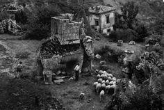 Herbert List :: Park of the Palazzo Orsini, Bomarzo, Italy, 1952. / parco dei monstri, herd, shepherd, elephant sculpture, effigy Herbert List, Munich, Capri Italia, Haunting Photos, Elephant Sculpture, Alfred Stieglitz, Max Ernst, Modern Photography, Effigy