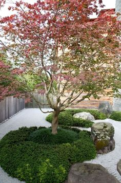 A little or small courtyard garden doesn't have to be boring and featureless. You might not have the space for it but you always have the option to incorporate the style in your garden. Much like a…MoreMore #JapaneseGarden