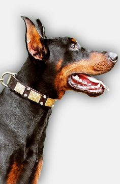 We present you today this awesome Leather Doberman Collar with luxury vintage…