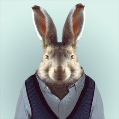 HARE by Yago Partal for ZOO PORTRAITS