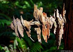 Worn Out Branch by smenzel, via Flickr