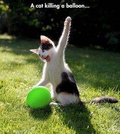 Tout un poème    Quand ça doit péter !!!  chat décuple la force .. et chat va t'en ramasser une ! le petit Vert  Paf !
