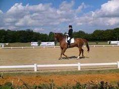 """Résultat de recherche d'images pour """"chevaux de course"""""""