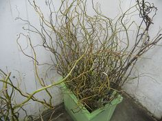 Curly willow is amazing in tall arrangements! August Flowers, Spring Flowers, Growing Flowers, Planting Flowers, Local Color, Curly Willow, Fall Arrangements, Outdoor Wedding Decorations, How To Get Warm