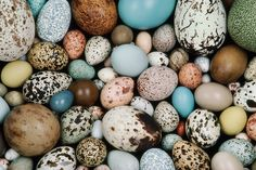 Huge survey reveals that bird species spending more time on the wing tend to have long or pointy eggs