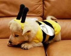 If you're looking for some of the cutest dog Halloween costumes on the net then you've come to the right place. Check out these awesome puppy dog costumes! Cute Puppies, Cute Dogs, Dogs And Puppies, Maltese Puppies, Poodle Puppies, Terrier Puppies, Doggies, Animal Costumes, Pet Costumes