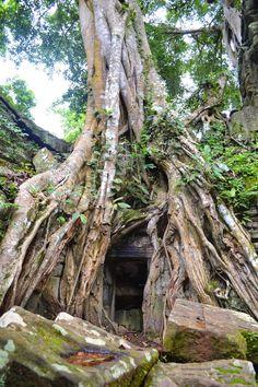 De tempels van Angkor, Siem Reap ~ Reislust. http://www.reislust.com/2015/02/de-tempels-van-angkor-siem-reap.html #Angkor #angkorwatt #taprohm #cambodia #travel #travelblogger #asia #backpacker #backpacking #templesofangkor #templeangkorwatt