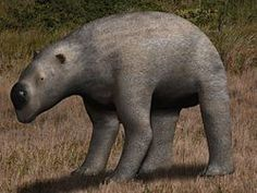 Diprotodon - Wikipedia, la enciclopedia libre