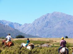 Breathtaking Scenic Trails in the Cape Winelands, for young and old, novice and experienced Cape Town, South Africa, Attraction, Trail, Horses, Explore, Mountains, Nature, Naturaleza