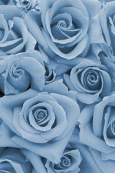 Hintergrundbilder iphone - Dusk - Pairs well with: Sky, Melon, Steel & Red. Blue Roses Wallpaper, Blue Flower Wallpaper, Blue Wallpaper Iphone, Blue Wallpapers, Aesthetic Iphone Wallpaper, Blue Backgrounds, Aesthetic Wallpapers, Phone Backgrounds, Light Blue Aesthetic