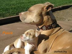 Love.. cute puppies and mommy love!!!