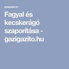 Fagyal és kecskerágó szaporítása - gazigazito.hu
