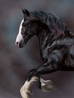 Gorgeous dark black horse with a white face, blaze and feathered feet. Running or rearing. So good I can't tell if it is a painting or photo. Please also visit www.JustForYouPropheticArt.com for more colorful art you might like to pin. I have a few horse paintings and will be painting more. Thanks for looking!