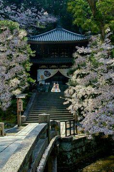 Templo Chionin, se encuentra en el barrio Higashiyama-ku,  en la ciudad de Kyoto, es budista Jodo (tierra pura )