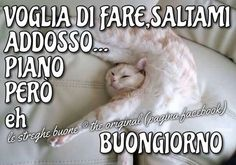 Buon giorno Good Morning Good Night, Animals And Pets, Funny, Bob, Happy, Positive Quotes, Photos, Fotografia, Days Of Week