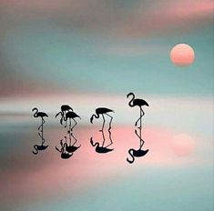 Pink Flamingos art Flamingo Art, Pink Flamingos, Shadow Puppets, Cool Drawings, Sketches, Fine Art, Wallpaper, World, Cute