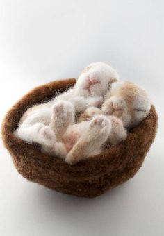 Baby Bunnies, Bunny Sculptures, Needle Felted Bunnies, Bunny