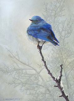 high perch / mountain bluebird by R Christopher  Vest