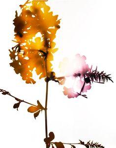 James Welling Watercolor Pattern, Watercolor Flowers, Watercolor Art, Modern Artists, Sensitivity, Watercolors, Flower Art, Silhouettes, Contemporary Art