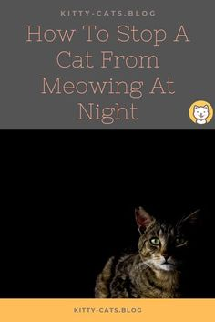 How to stop a cat from meowing at night is probable what intricating you. Countless reasons make your cat excessively yowling when the night comes. However, we can divide those causes into specific main points. In this post, we will introduce to you several common knowledge on how to cope up with your cat constantly meowing at night. however can be dynamic when they're not sawing logs. Also, there is a lot of factors that are leading to cat constantly meowing at night. Cat Meowing At Night, Kitty Cats, First Time Cat Owner, Animal Help, Cat Harness, Owning A Cat, Cat Health, Health Care