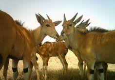 Erwischt: 1,2 Millionen Bilder aus dem Serengeti-Nationalpark in Tansania haben...