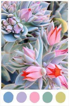 'Winter' colour palette inspiration - cornflower, lavender, begonia, eucalyptus, hellebore