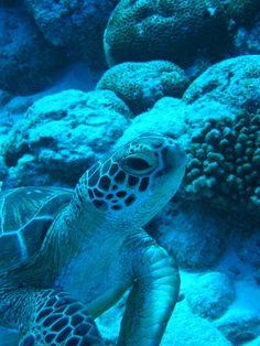 Aldabra Atoll, Seychelles