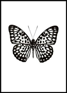 Poster with a black and white butterfly on a white background.