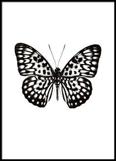 Poster mit schwarz-weißem Schmetterling