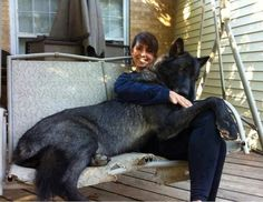 Big black wolf hybrid dog with her master, click on the pic for full information about this breed :):