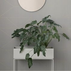 10 Best Plant Pots - Mad About The House