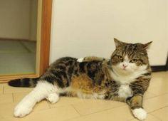 Esta gatita que siempre se siente cómoda frente a la cámara: