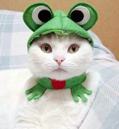 """Mamaw loved cats and frogs. She had a white cat with one green eye and one blue eye. She called her """"Kitty Blue Eye"""". I Love Cats, Crazy Cats, Cute Cats, Funny Cats, Funny Animals, Cute Animals, Costume Chat, Frog Costume, Chat Halloween"""