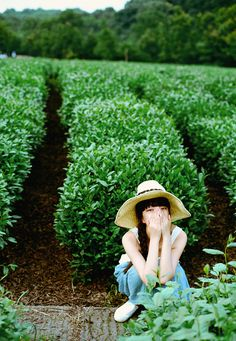 If that is a Tea Farm then I am set~