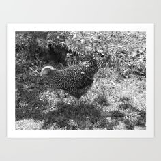 https://society6.com/product/speckled-hen-on-grass_print?curator=hereswendy
