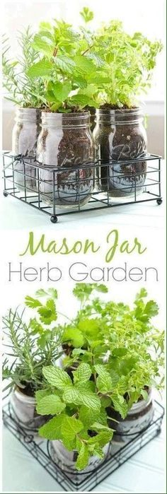 Mason Jar herb garden #herbsgarden
