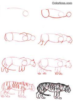 comment dessiner tigre
