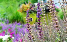 """Photo """"Flowers and a Bee"""" by teewhyell"""