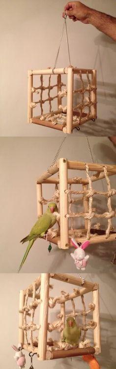 Die 32 Besten Bilder Von Nymphensittiche Parakeets Parrots Und