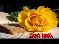 Still Life - Rose and Poems - Gif Animé, Animated Gif, Feliz Gif, New Year Wallpaper, Le Jolie, Animation, New Years Eve Party, Yellow Roses, Amazing Flowers