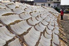 Vermicelli Drying (曬米粉)