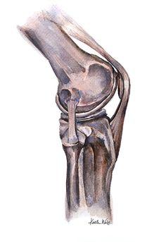 Knee Joint Watercolor Print Patella Femur Tibia by LyonRoad
