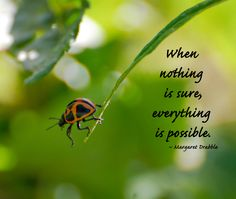 When nothing is sure, everything is possible. -Margaret Drabble - photo by Kerri / A Little Piece of Me