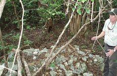 Endangered Key Largo wood at's nest at Crocodile Lake National Wildlife Refuge