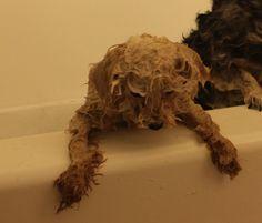 Bath again. Unfair.