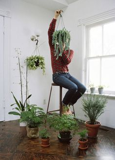 Buenos Aires house plants